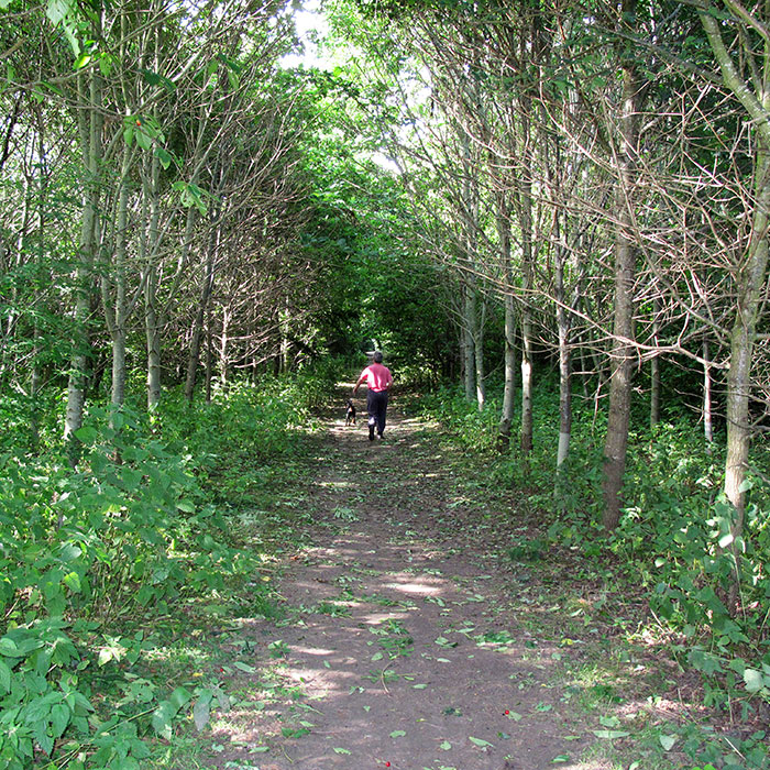 Norfolk Homes have gifted a popular 15 acre woodland to the village of Poringland
